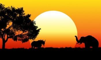 Op safari!